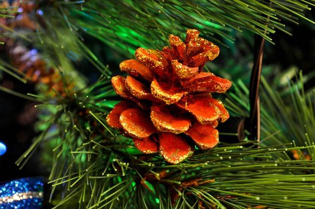 La naturaleza para decorar en Navidad